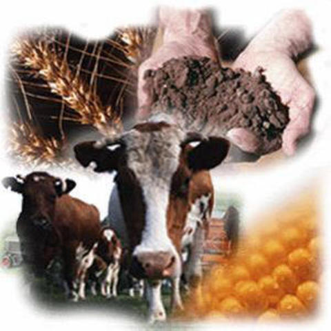 imtroduction of farming and livestock