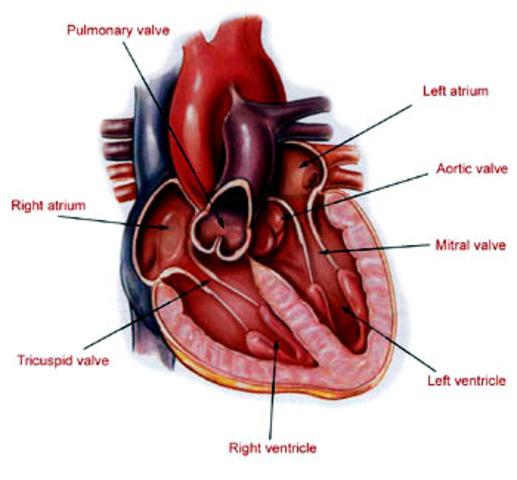 1st Heart Transplant