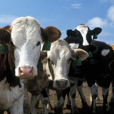 frozen beef export name: gianni timeline