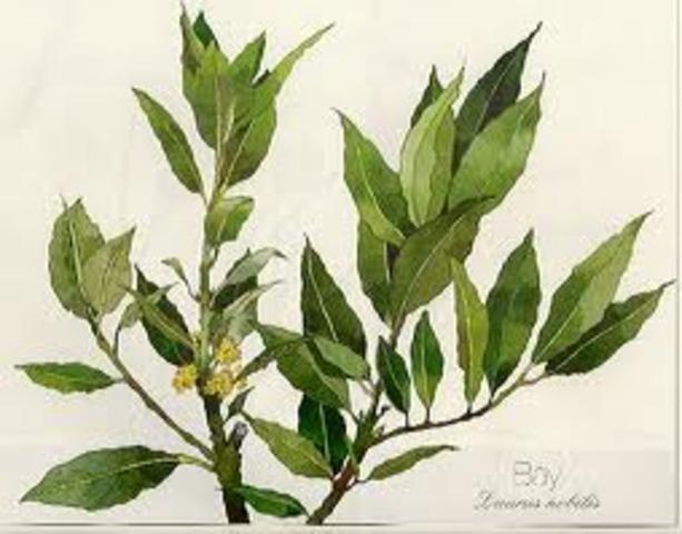 Olive Branch Peittion