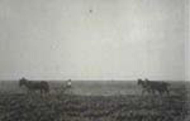 Film Clip, Alfalfa Farm near Deming