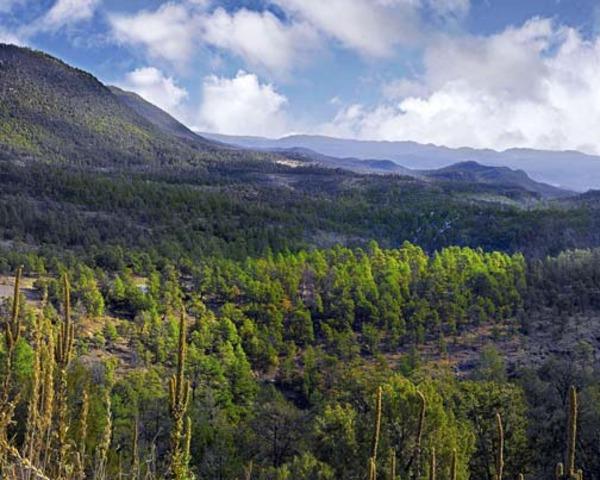 Gila Wilderness Established - 550,000 Acres