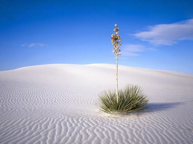White Sands is established