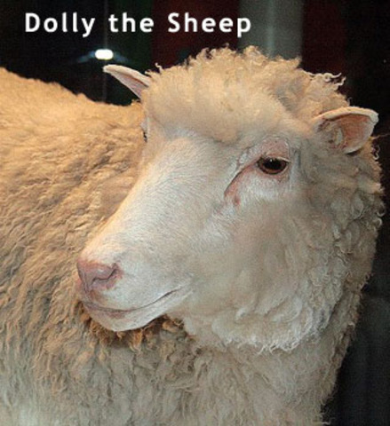 Dolly the sheep is born