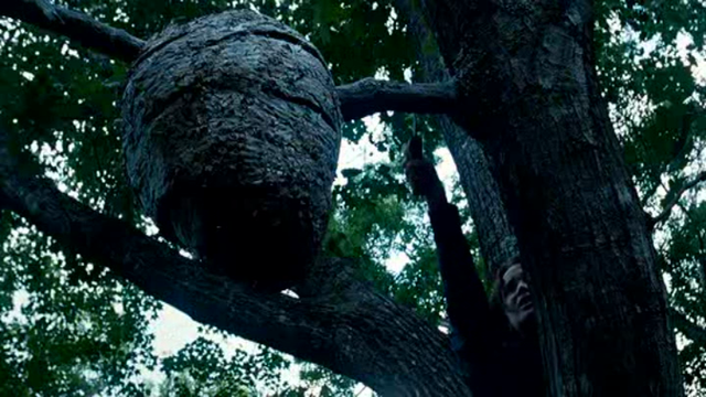 Katniss sets tracker jackers on the other tributes