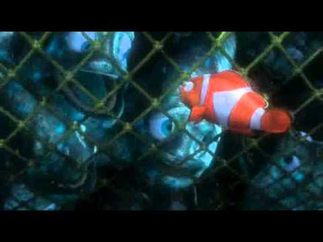 Nemo and Dory are caught in fishing net.