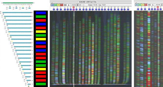 Flourescence Sequencer