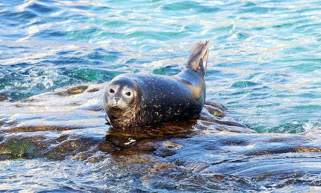Marine Mammal Protection Act