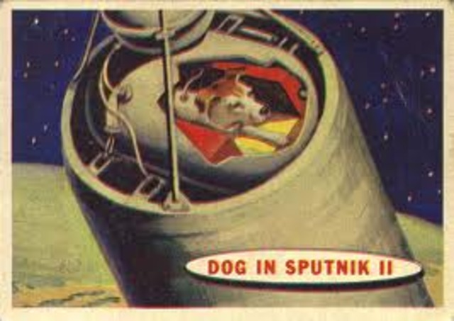 First Living Animal in Space