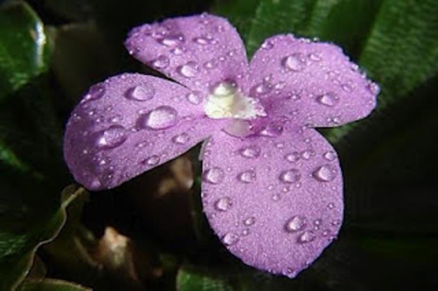 Los erudtios a la violeta (José Cadalso)