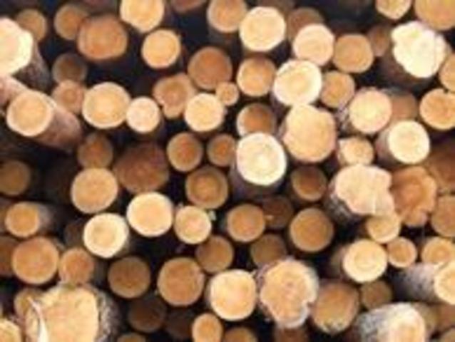 Timber Trade replaces fur trade