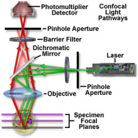 Theory of the Microscope