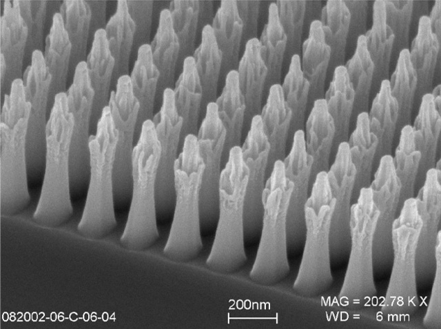 First Electron Micrograph