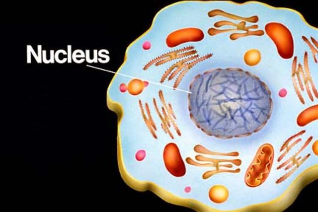 Robert Brown Discovered Nucleus