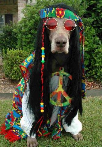 Hippie Movement