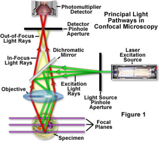 Scanning laser confocal microscope is commercially available