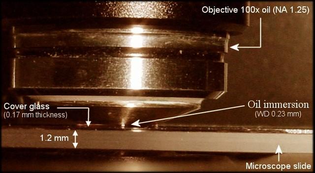 Oil immersed lenses