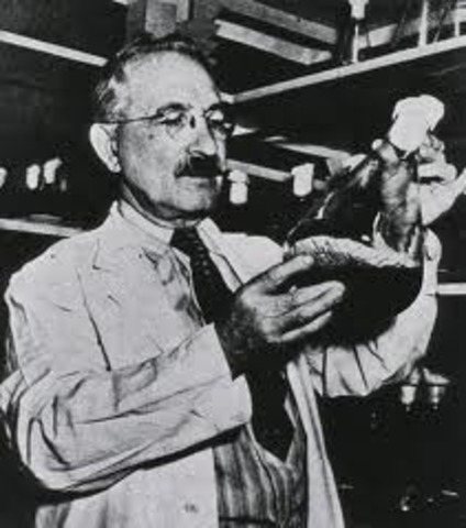 First Antibiotic Streptomycin