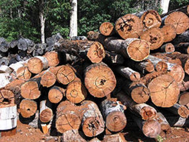 Timber replacees fur as main export