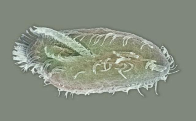"Antoni van Leeuwenhook discovered ""little animals"" through a microscope."