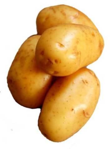 The Beginning of the Potato Famine