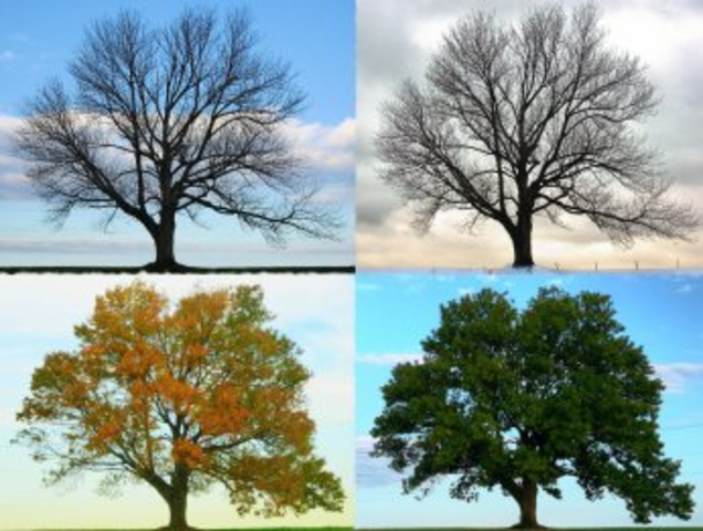 Published Four Seasons Concerto