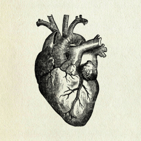 On the Movement of the Heart and the Blood (Harvey)