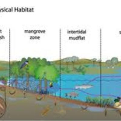 Habitat timeline