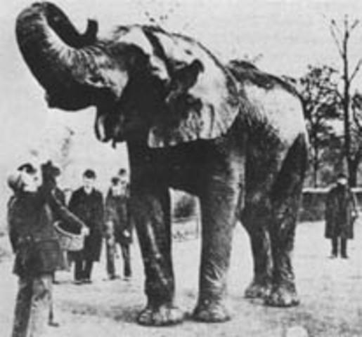 Phineas koopt de beroemde olifant Jumbo aan