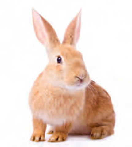 Rabbits?