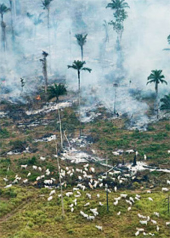 Quatre grands noms du commerce de viande s'engagent contre la déforestation