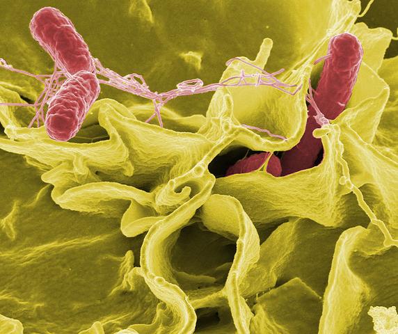 """Cours public - """"Des microbes dans nos assiettes. Crainte ou confiance ?"""""""