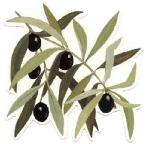L'olive, un symbole de paix antique qui perdure