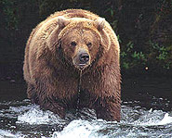 Into Grizzly Country