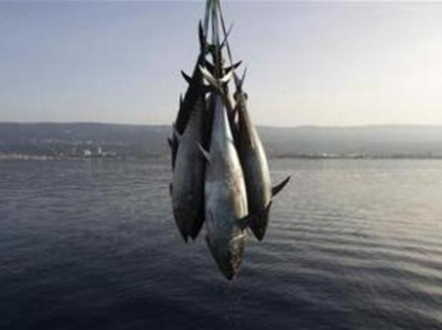Interdiction de l'importation de thon
