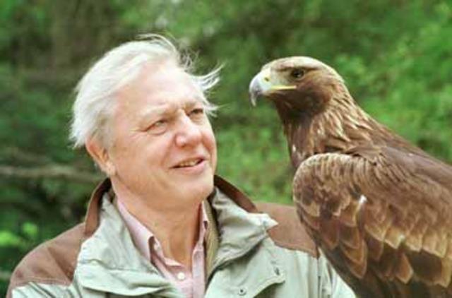 David Attenborough's documentaries