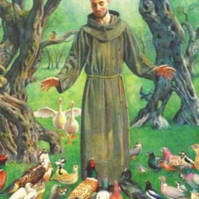 Steph P.- St. Francis of Assisi timeline