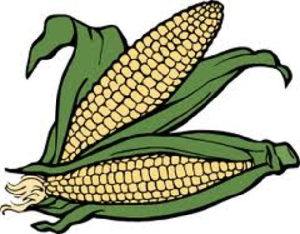 American Crops