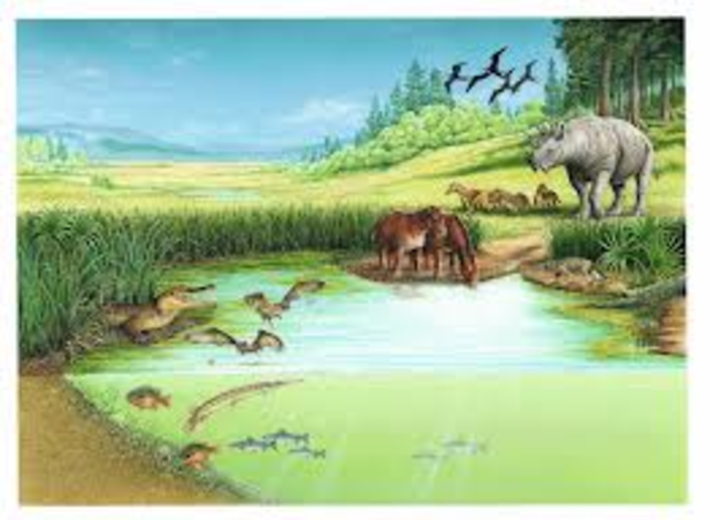 Eocene Period 1:00pm