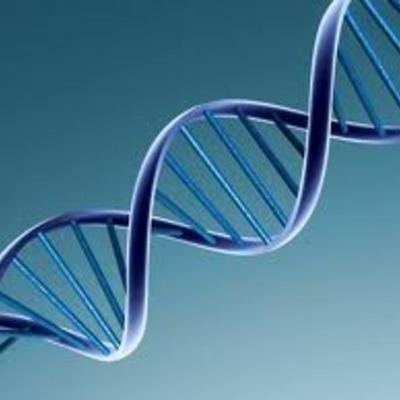 The Discovery of DNA timeline