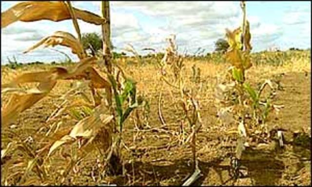 Crops Fail