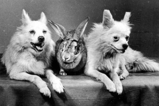 4. Rabbits
