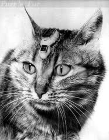 7. Cats