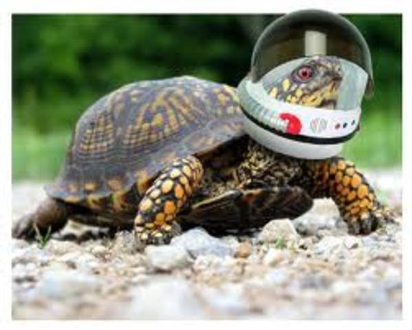 8. Turtles