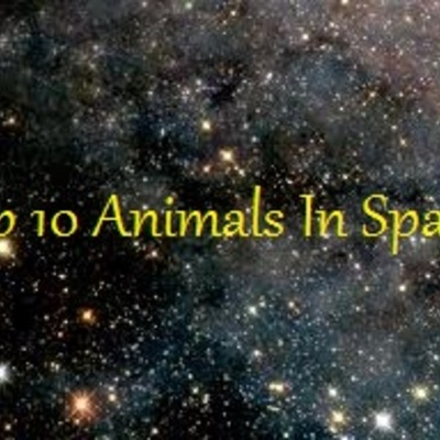 Animals that have successfully gone to space (from their categories). timeline