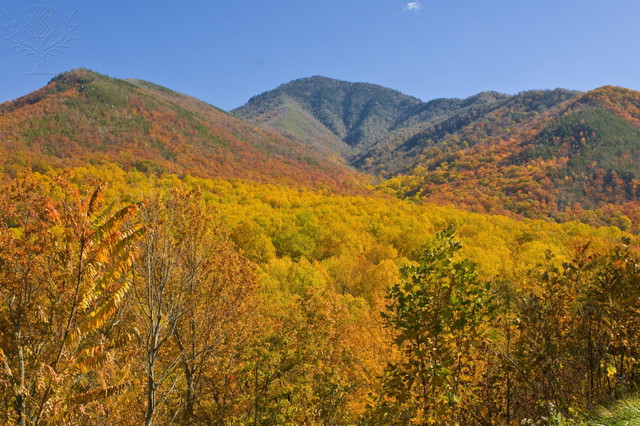The Smoky Mountains National Park Opens!