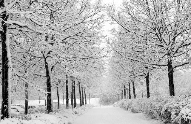 Winter Travasties