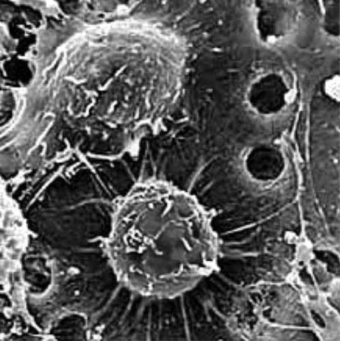Было сделано открытие стволовых клеток