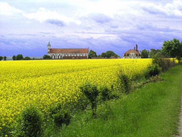 Batalla de Ulm