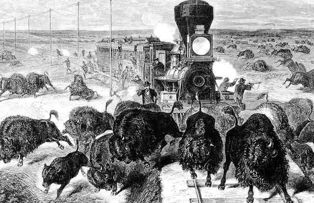End Of Buffalo Herds
